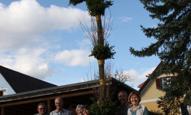 Riesen-Palmbuschen